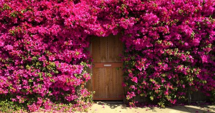 10 Ways to Start Your Own Garden