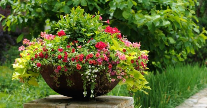 Ways to Start Your Own Garden