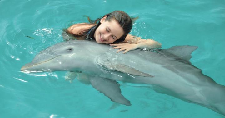 Dolphin Discovery, Riviera Maya