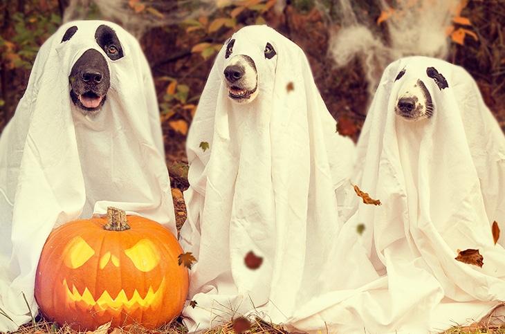 Halloween DIY Pet Costumes